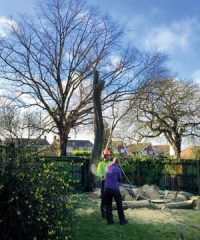 Barnes & Wells Tree Care